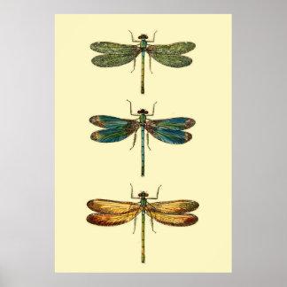 Het Collectie van de Insecten van de libel Poster