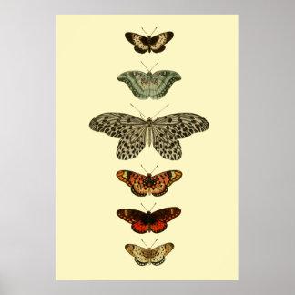 Het Collectie van de Insecten van de vlinder Poster