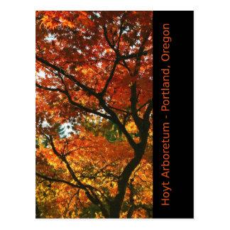 Het Contrast van de herfst Briefkaart