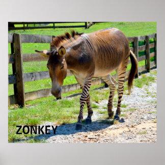 Het deelZebra en Ezel van Zonkey Poster