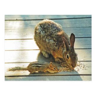 Het Delen van het konijntje en van de Aardeekhoorn Briefkaart
