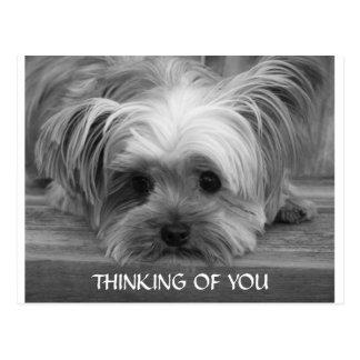 Het denken aan u het Briefkaart van het Puppy van