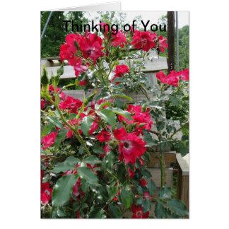 Het denken aan u, Vreugde & Zegen, Rozen Wenskaart