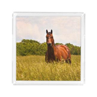 Het Dienende Dienblad van het Paard van de hengst
