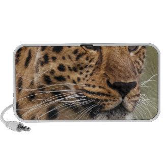 Het Dier van de jachtluipaard Laptop Speakers