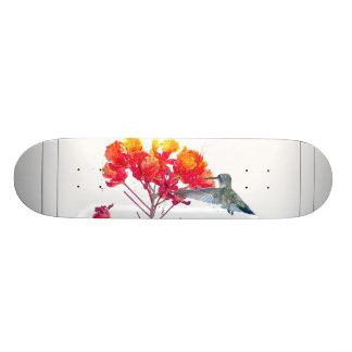 Het Dier van het Wild van de Vogel van de kolibrie 19,7 Cm Skateboard Deck