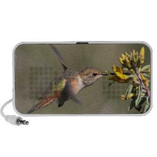 Het Dierlijke Wild van de Vogel van de kolibrie Speaker