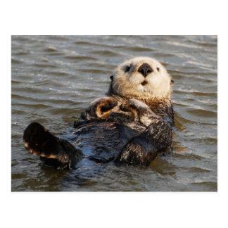 Het drijven de Otter van het Zee Briefkaart