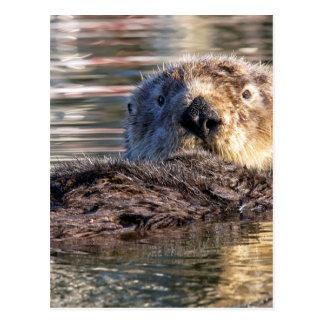 Het drijven Otter Briefkaart