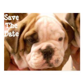 Het Engelse Puppy van de Buldog Briefkaart