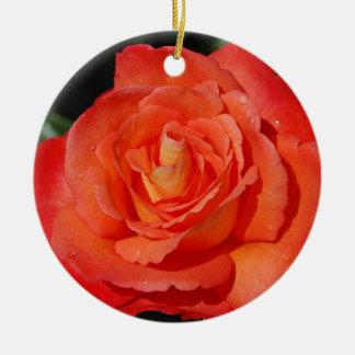 Het enige sinaasappel nam toe rond keramisch ornament