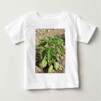 Het enige verse basilicumplant groeien op het baby t shirts