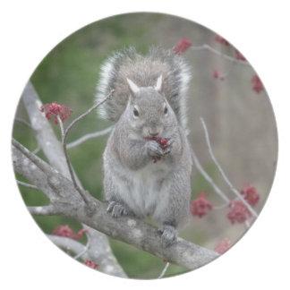 Het eten van de eekhoorn party bord
