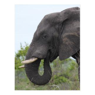 Het Eten van de olifant Briefkaart