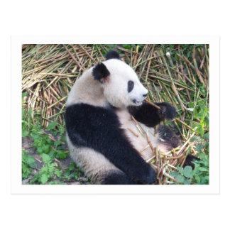 Het Eten van de panda Briefkaart