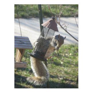 Het eten van Eekhoorn Briefkaart