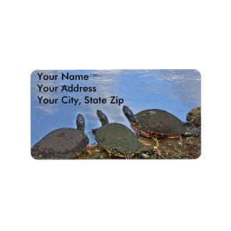 Het Etiket van de Post van de schildpad