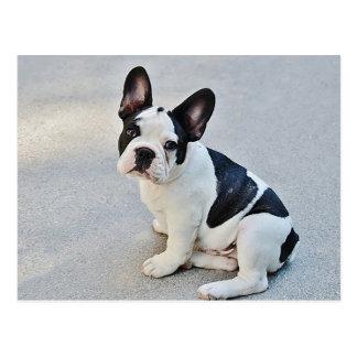 Het Franse Briefkaart van de Hond van het Puppy