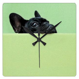 Het Franse Puppy dat van de Buldog over Muur tuurt Vierkante Klok