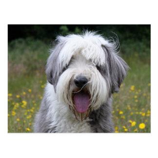 Het gebaarde briefkaart van de de hond mooie foto