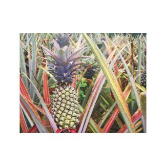 Het Gebied van de ananas, Ananas, Fotografie Canvas Afdruk
