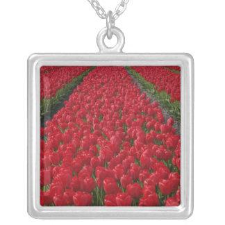 Het gebied van de bloem van tulpen, Nederland, Ketting Vierkant Hangertje