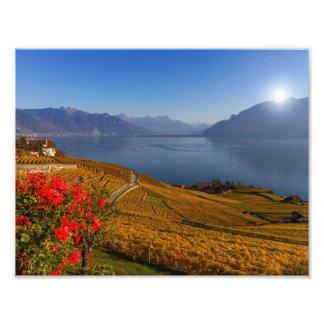 Het gebied van Lavaux, Vaud, Zwitserland Foto