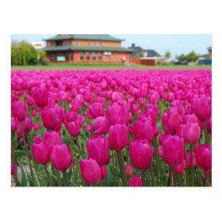 Het Gebied van tulpen Briefkaart