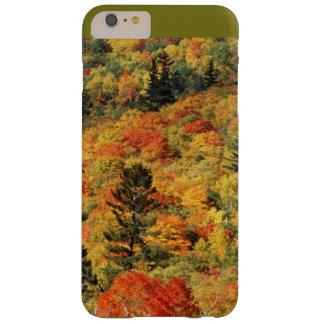 Het gebladerte van de herfst barely there iPhone 6 plus hoesje