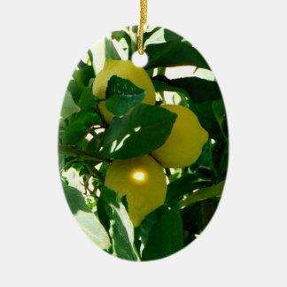 Het Geelgroene Ornament van de Boom van de citroen