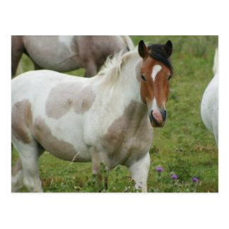 Het geknipte Briefkaart van het Paard van de Verf