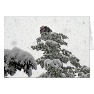Het Geknuffel van Eagles in de Sneeuw Briefkaarten 0