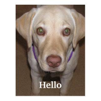 Het Gele Labrador Briefkaart van Hello