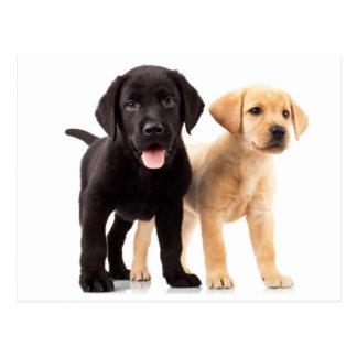 Het gele & Zwarte Briefkaart van het Puppy van de Wenskaart