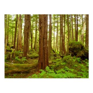 Het Gematigde Regenwoud van Alaska Briefkaart