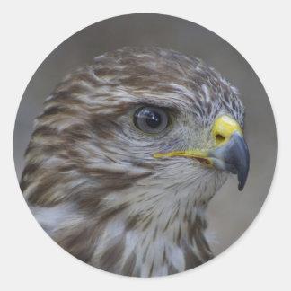 Het gemeenschappelijke Portret van de Buizerd Ronde Sticker