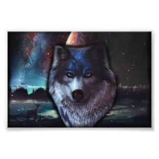Het gezicht van de wolf in het ruimte, Blauwe wolf Foto Kunst