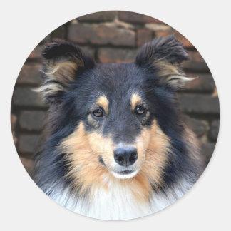 Het gezicht van Sheltie van Tricolor Ronde Sticker