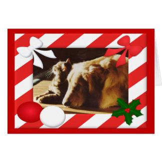 Het gouden retriever-Kat Lijst van de Kerstkaart Wenskaart