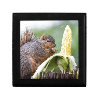 Het Graan van de eekhoorn Decoratiedoosje