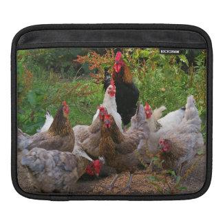 Het grappige Sleeve van iPad van de Kippen van het