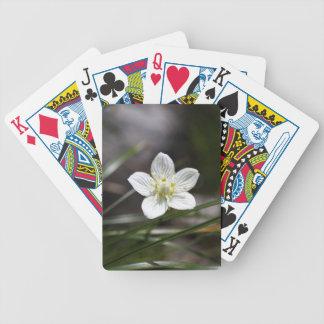 Het gras van het moeras van Parnassus (palustris Poker Kaarten