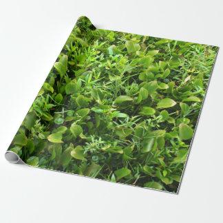 Het groene Plant van het Moeras Inpakpapier