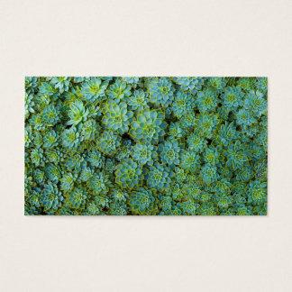 Het groene Plant van Succulents Echeveria Visitekaartjes