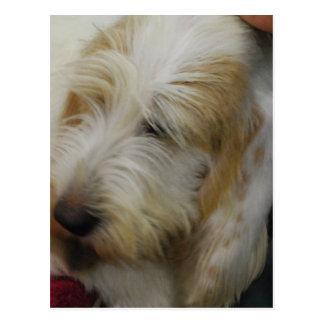 Het grote Basset Briefkaart van de Hond