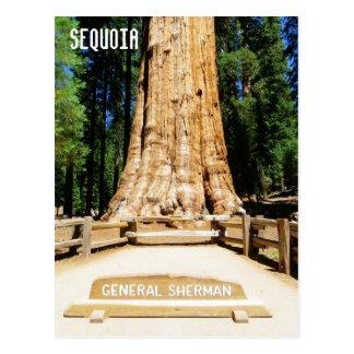 Het grote Briefkaart van de Sequoia!