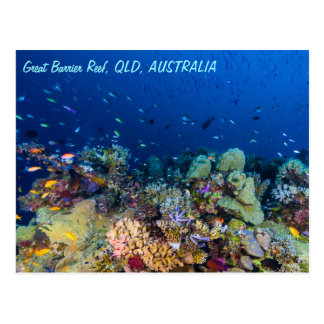 Het grote Briefkaart van het Barrièrerif