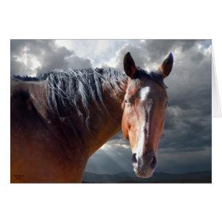 Het grote Paard van het Kwart van de Baai Briefkaarten 0