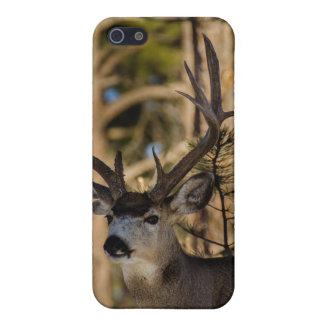 Het hoesje van de hertenIphone van de muilezel iPhone 5 Covers