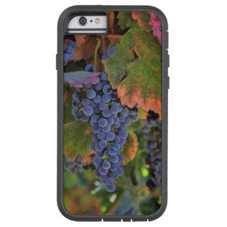 Het Hoesje van IPhone van het Land van de wijn